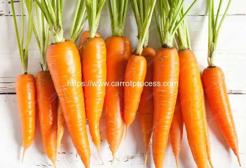 Nutrition-Facts-and-Health-Benefits-of-Carrots