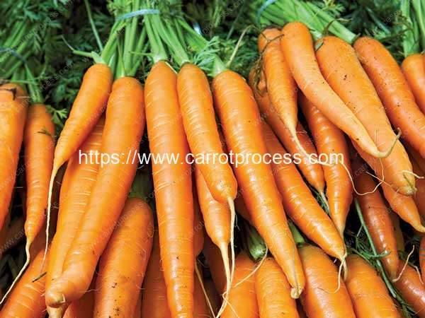 High-Nutritional-Carrots