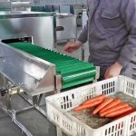 Automatic Carrot Top and End Cutting Machine